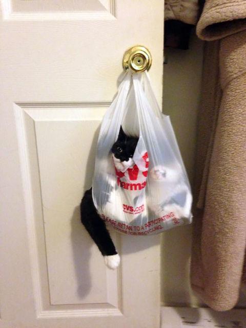 chats-mauvais-choix-20