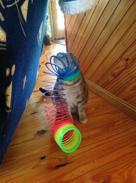 chats-mauvais-choix-3
