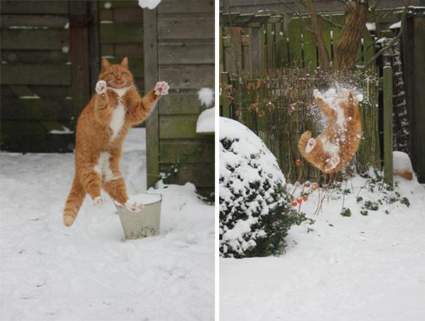 chats-mauvais-choix-5