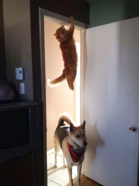 chats-mauvais-choix-6