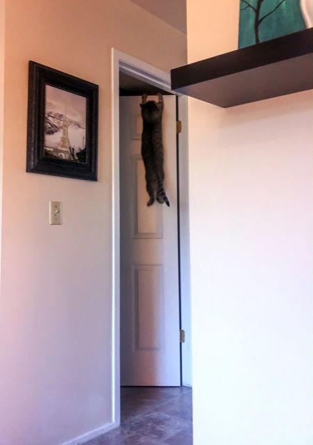 chats-mauvais-choix-8