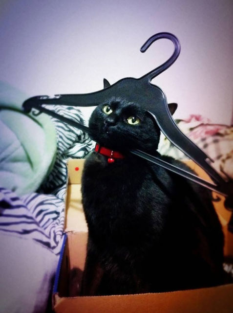 chats-mauvais-choix-9