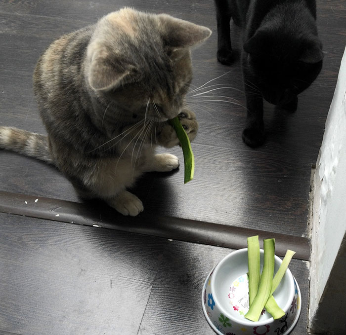 21 chats TRES gourmands qui mangent tout ce qu'ils trouvent ! 18