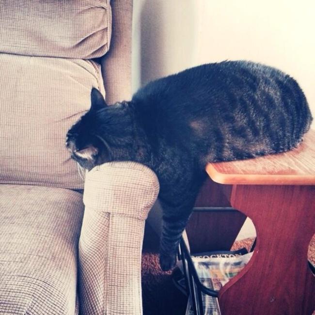 chats-paresseux-17