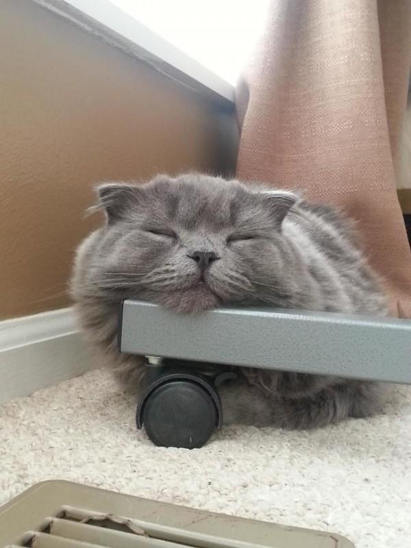 chats-paresseux-19