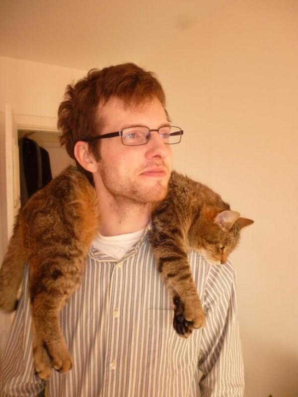 chats-paresseux-21