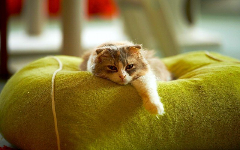 Les chats et la PARESSE : une grande histoire d'amour 24