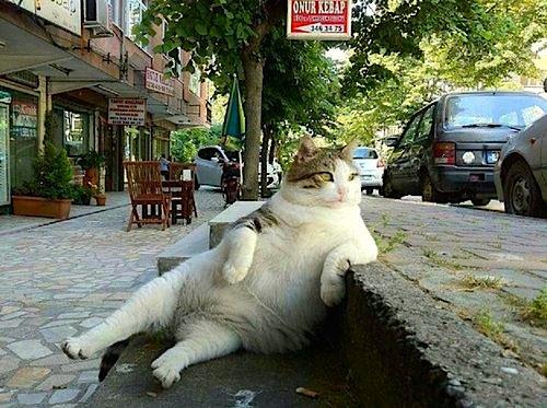 chats-paresseux-25