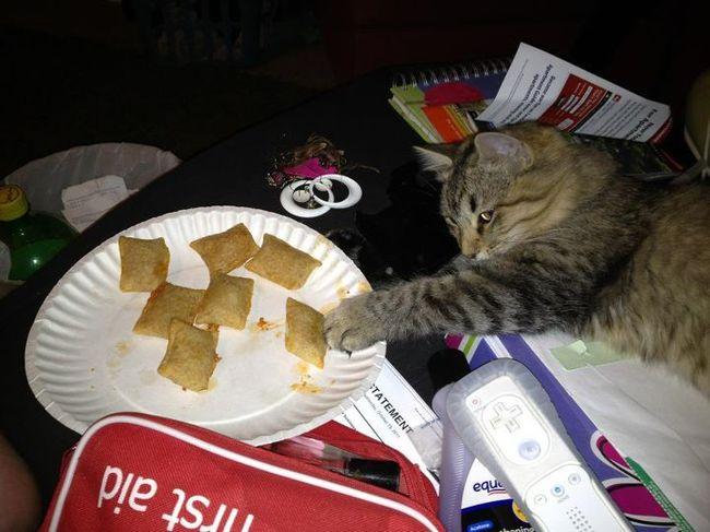 chats-paresseux-5