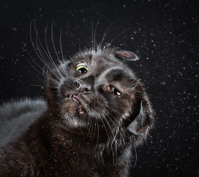 chats-qui-se-secouent-carli-davidson-2