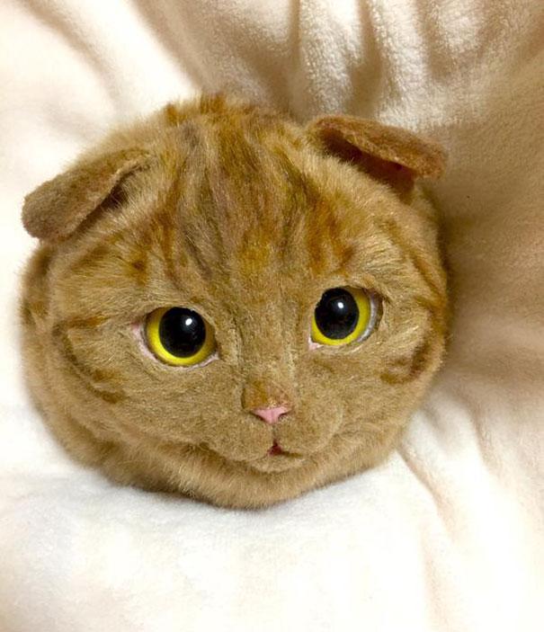 chats-sac-1