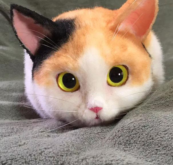 chats-sac-7