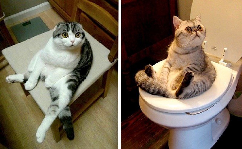 Ces chats ont découvert la position assise ! 20