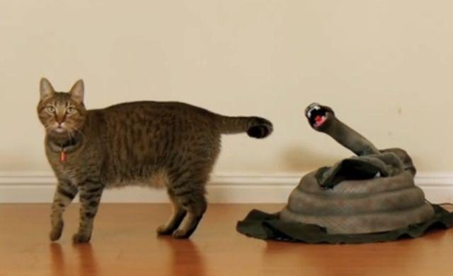 EXCELLENT : un chat, un serpent mécanique et le tour est joué !