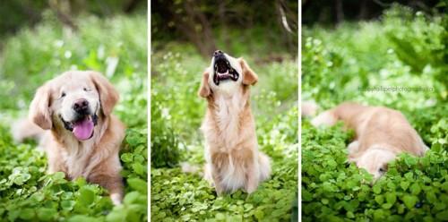 chien-aveugle-chakipet-1