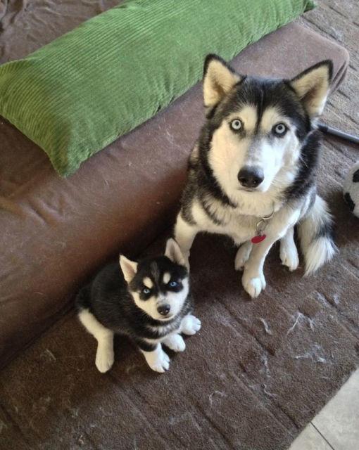 chien-et-chiot-6