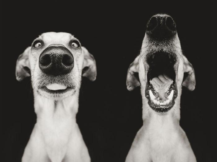 chien-expressif-vogelsang15