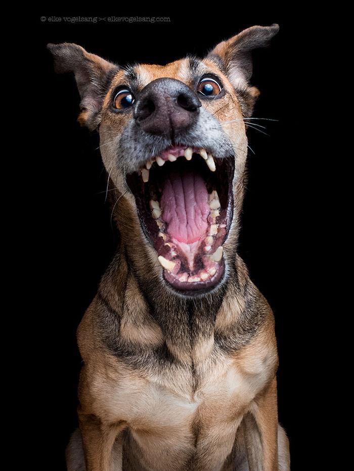 chien-expressif-vogelsang3