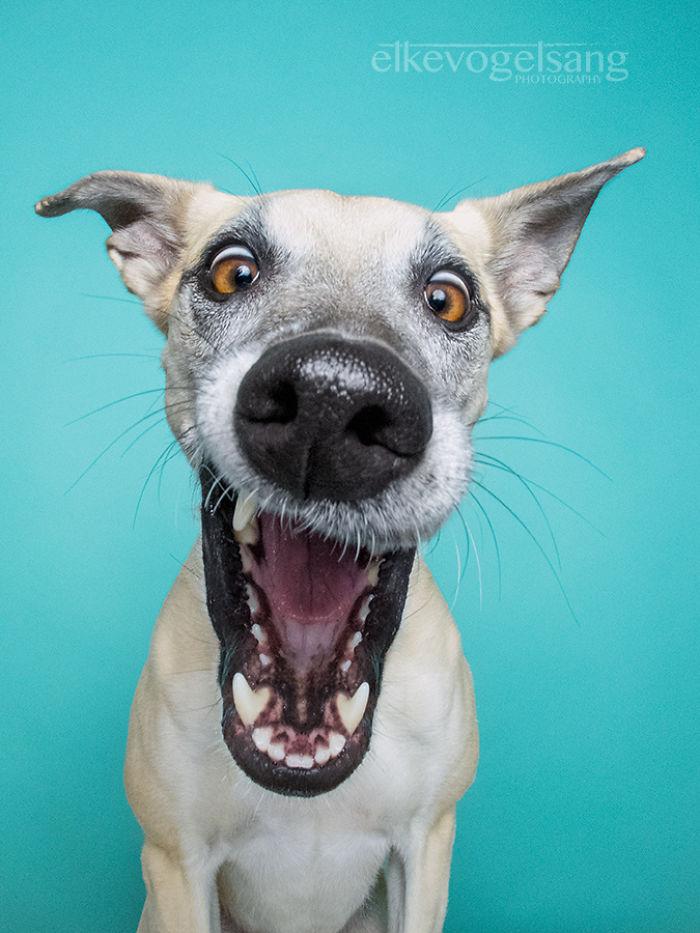 chien-expressif-vogelsang6
