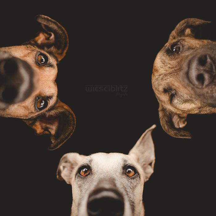 chien-expressif-vogelsang7