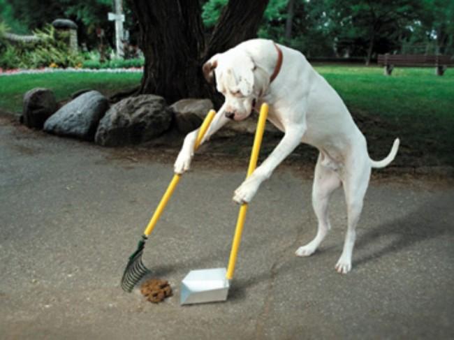 chien indépendant1