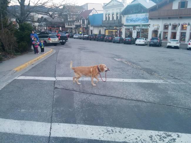 chien indépendant10
