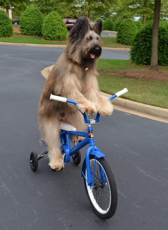 chien indépendant11