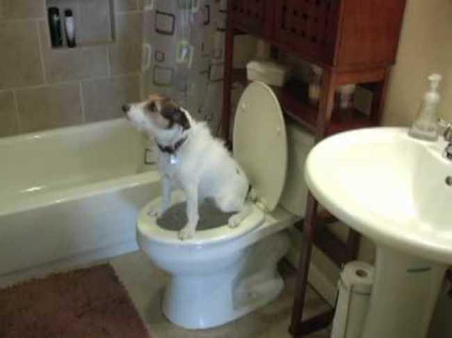 chien indépendant6