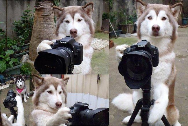 chien indépendant7