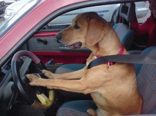 chien indépendant8