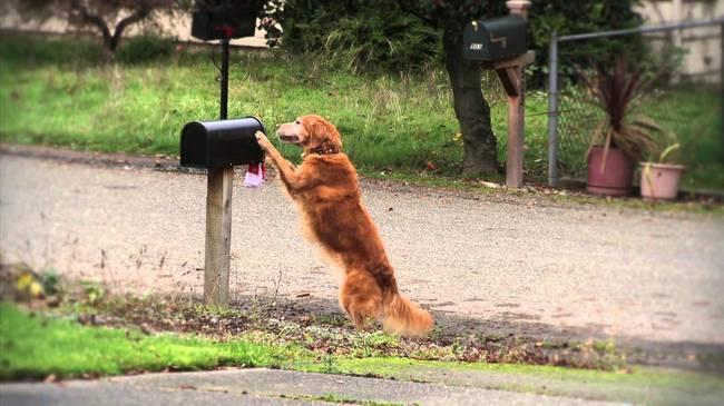 chien indépendant9