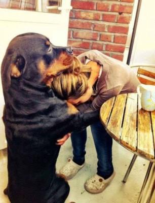 chien insolite12