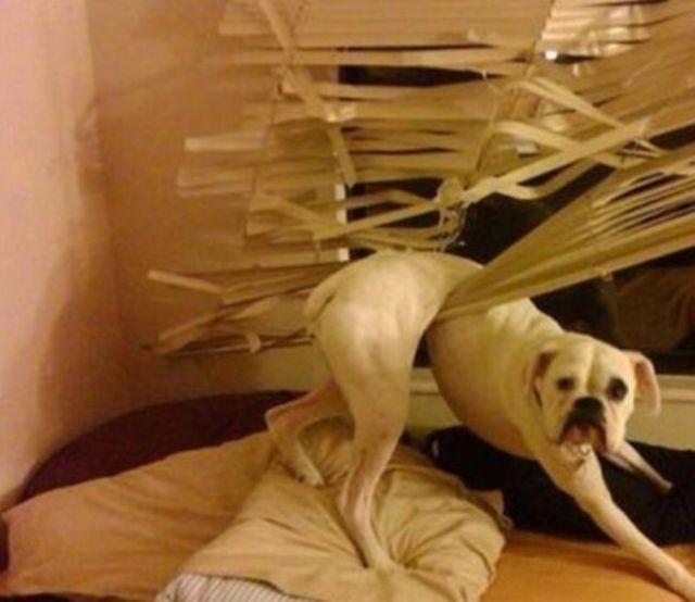 Ne jamais laisser un chien seul. 16