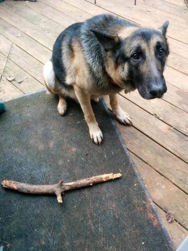 Insolite des chiens qui ont tout compris - Croisement chien insolite ...