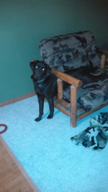 chien insolite18