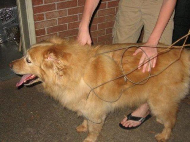 chien insolite19