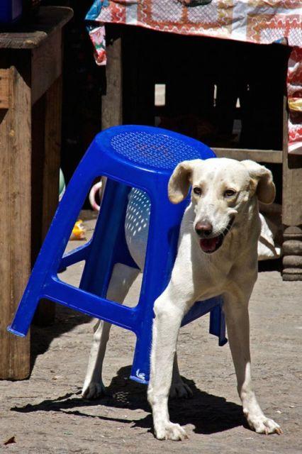 chien insolite21