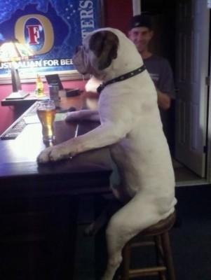 chien insolite2
