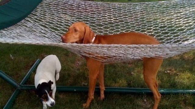 chien insolite3