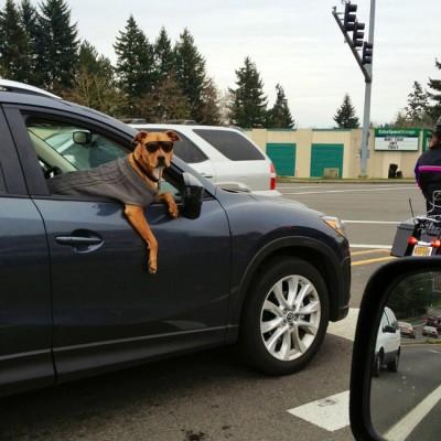 chien insolite5