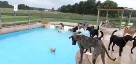 La piscine party des chiens