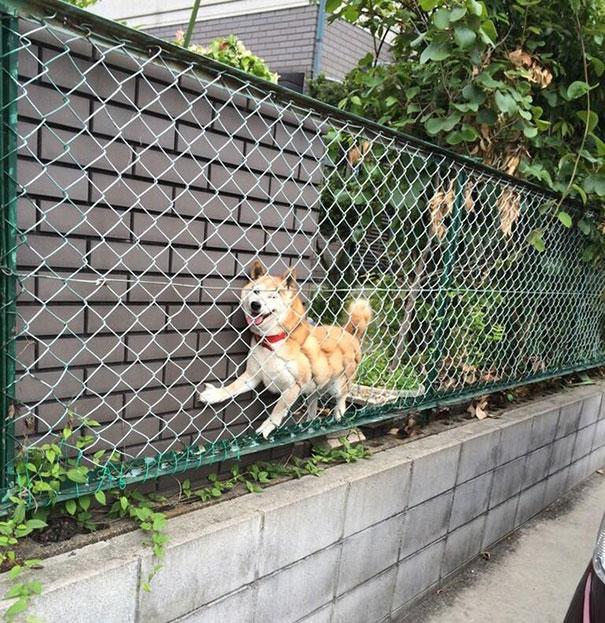 chien-regret-choix-10