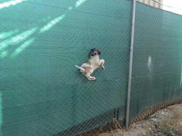 chien-regret-choix-6