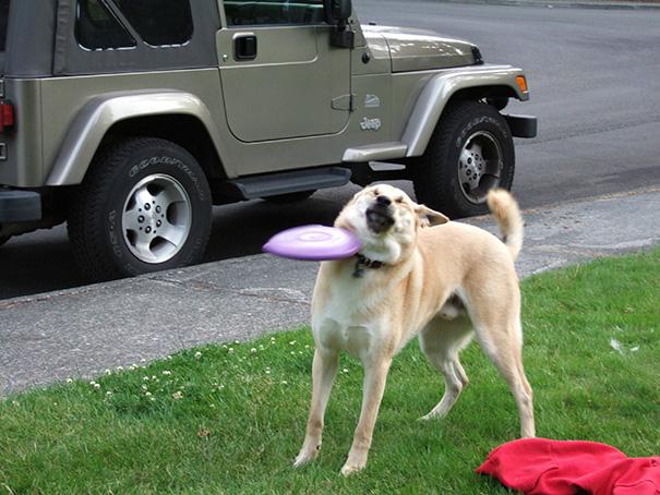 chien-regret-choix-7