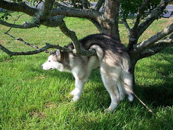 chien-regret-choix-8