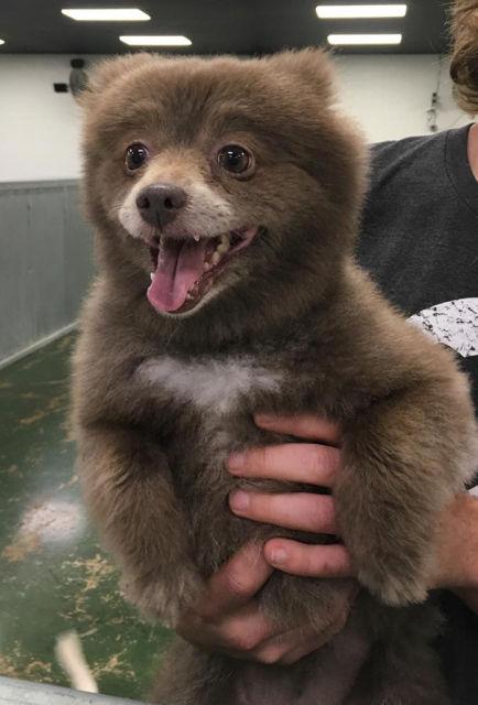 chien-ressemble-ourson-2