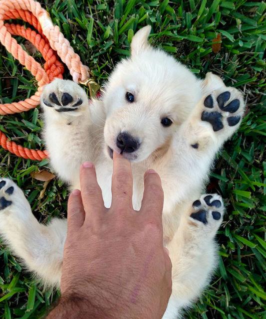 chien-ressemble-ourson-7