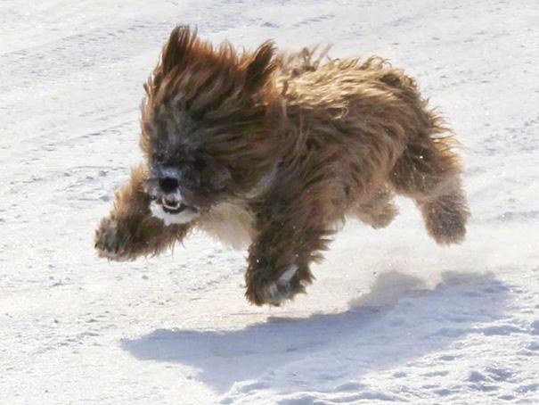 chien-ressemble-ourson-8