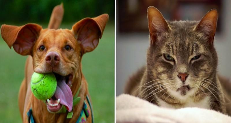 Confessions intimes d'un chien et d'un chat 7