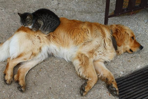 chiencoussin25